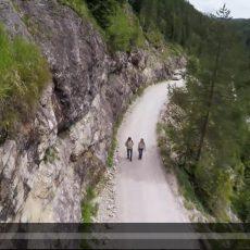 Klimawandel in den Alpen – Konsequenzen für Flora und Fauna